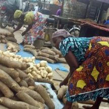 Veteran Journalist Shagari SamboTasks FCT Natives on Yam Farming