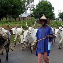 Five Persons Killed in Benue Fresh Herdsmen Attack